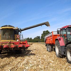 Récoltes Des Céréales