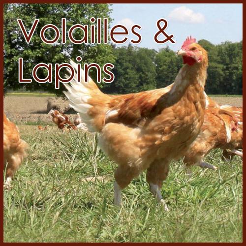 Volailles Lapins Canard Dinde Poulet Ets Rambeau Boucher éleveur Vente De Viande En Ligne élevage Charente-Maritime